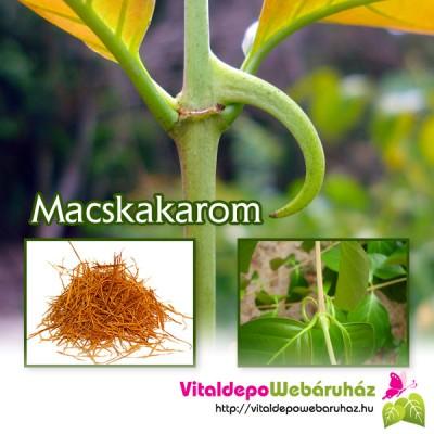macskakarom-emlorak-2013-10-24